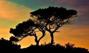 太阳下山时分大树剪影摄影高清图片