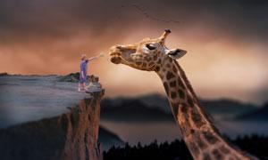 站在悬崖边给长颈鹿喂食的男孩图片