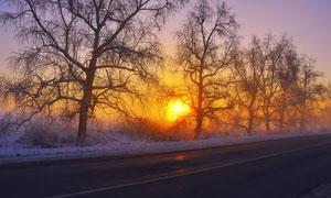 雪后的公路旁树木风光摄影高清图片
