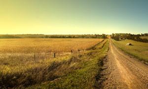田地农作物与乡间小路摄影高清图片