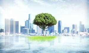 城市建筑物与一颗大树创意高清图片