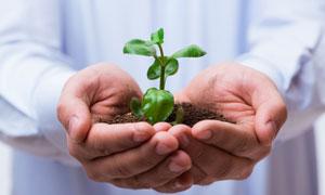 捧在手心里的绿色植物幼苗高清图片