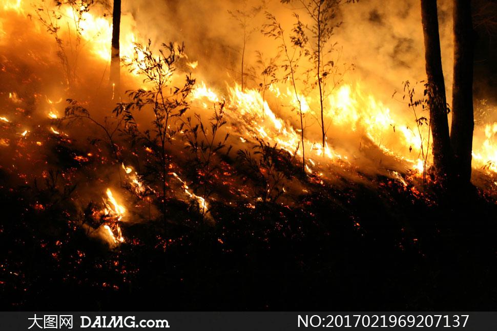 夜晚森林里的熊熊大火摄影高清图片