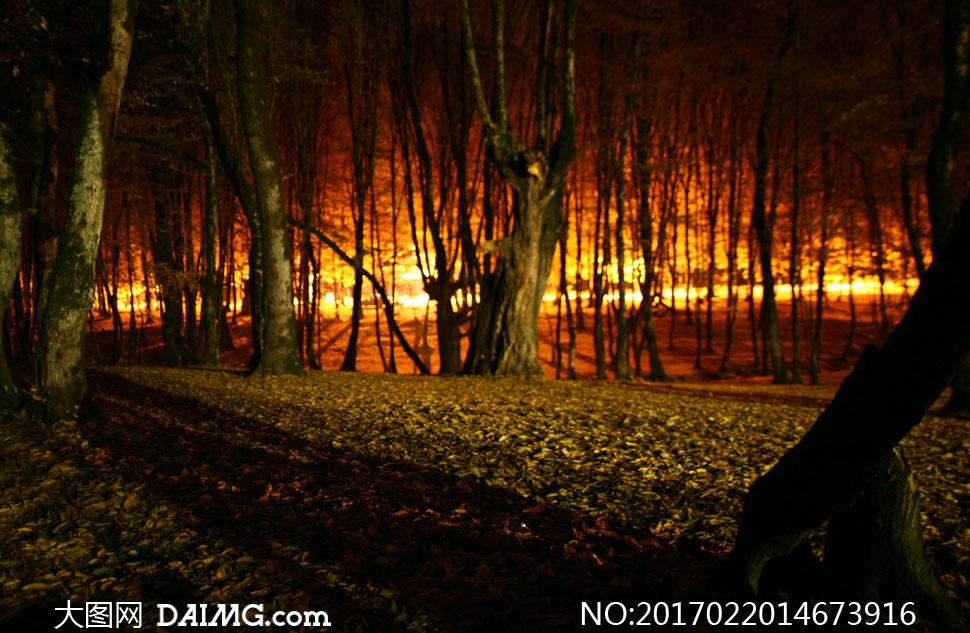 键 词: 高清大图图片素材摄影夜晚夜景树木树林大树消防大火火灾燃烧