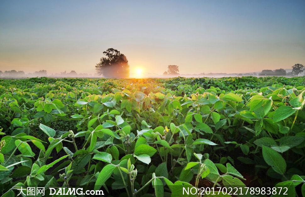 高清大图图片素材摄影自然风景风光农作物田地农田