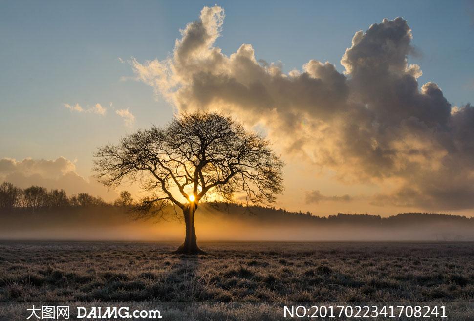高清大图图片素材摄影自然风景风光大树