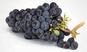 一串刚采摘下来的葡萄摄影高清图片