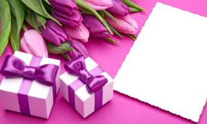 郁金香礼物盒与卡片等摄影高清图片
