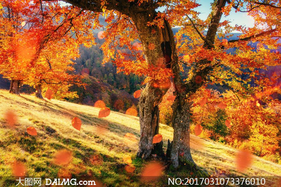 关 键 词: 高清图片大图图片摄影自然风光风景秋天秋季落叶树叶叶子