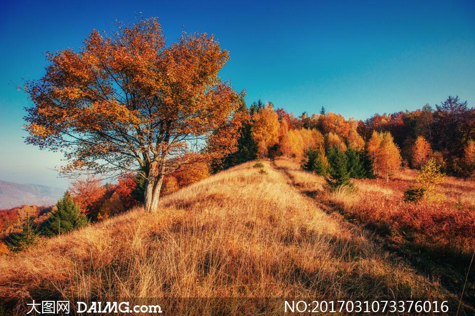 自然风光风景秋天秋季树木树林山坡草丛草地荒草茂密茂盛天空蓝天山间