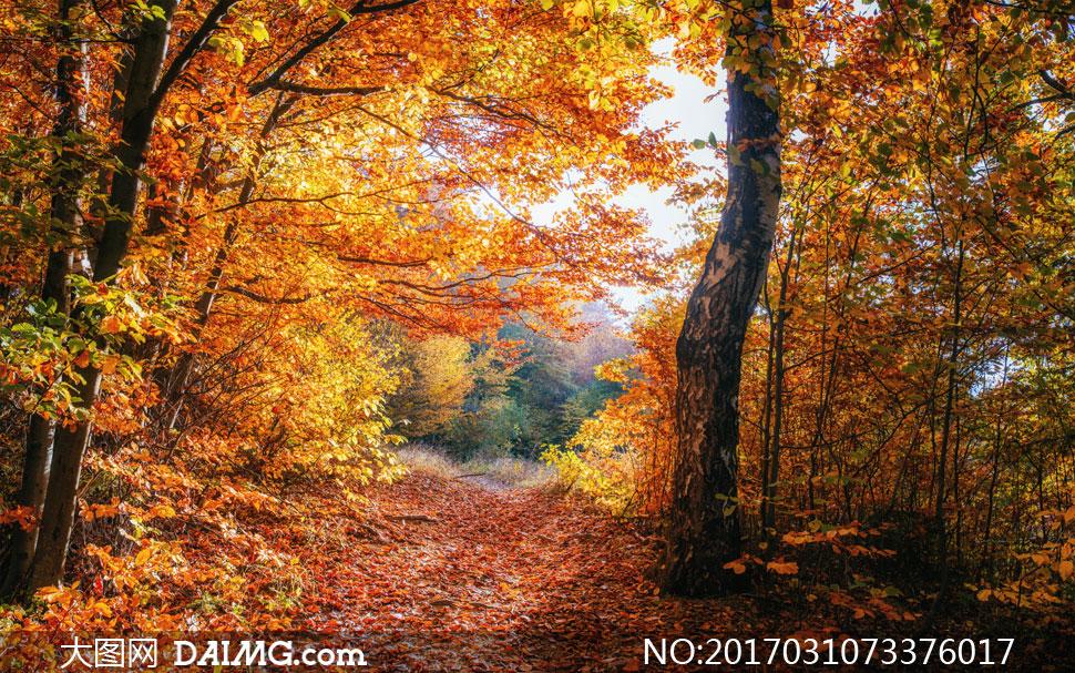 词: 高清图片大图图片摄影自然风光风景秋天秋季树木树林茂密茂盛小路