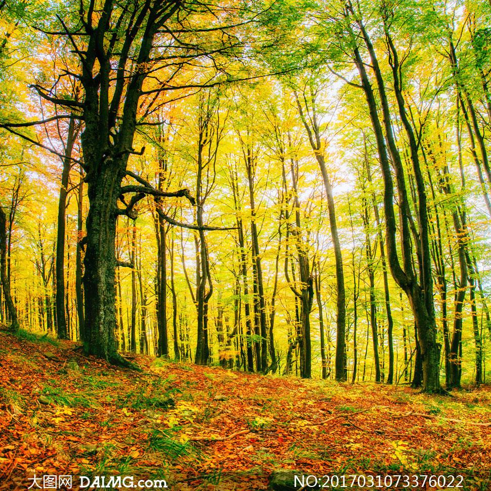入秋季节树林自然风景摄影高清图片