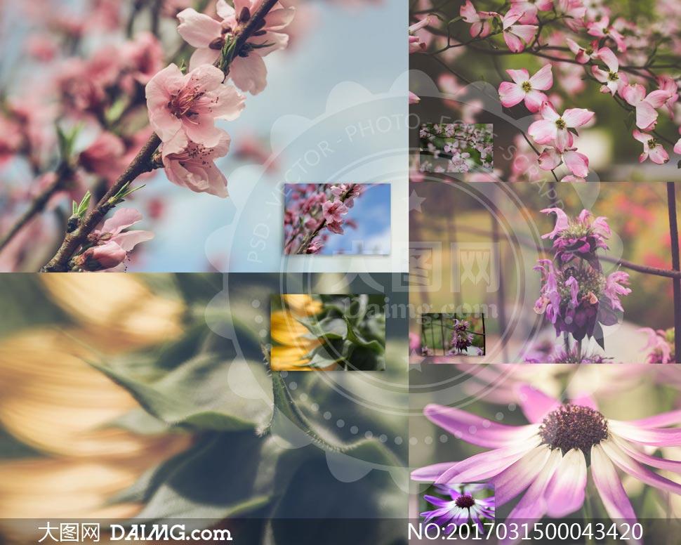 40款花朵静物复古磨砂效果LR预设