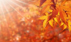 秋天泛黄树叶近景特写摄影高清图片