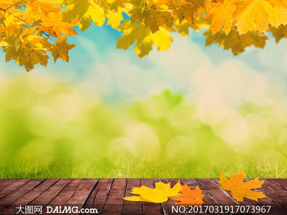 秋天树叶草丛与木地板摄影高清图片
