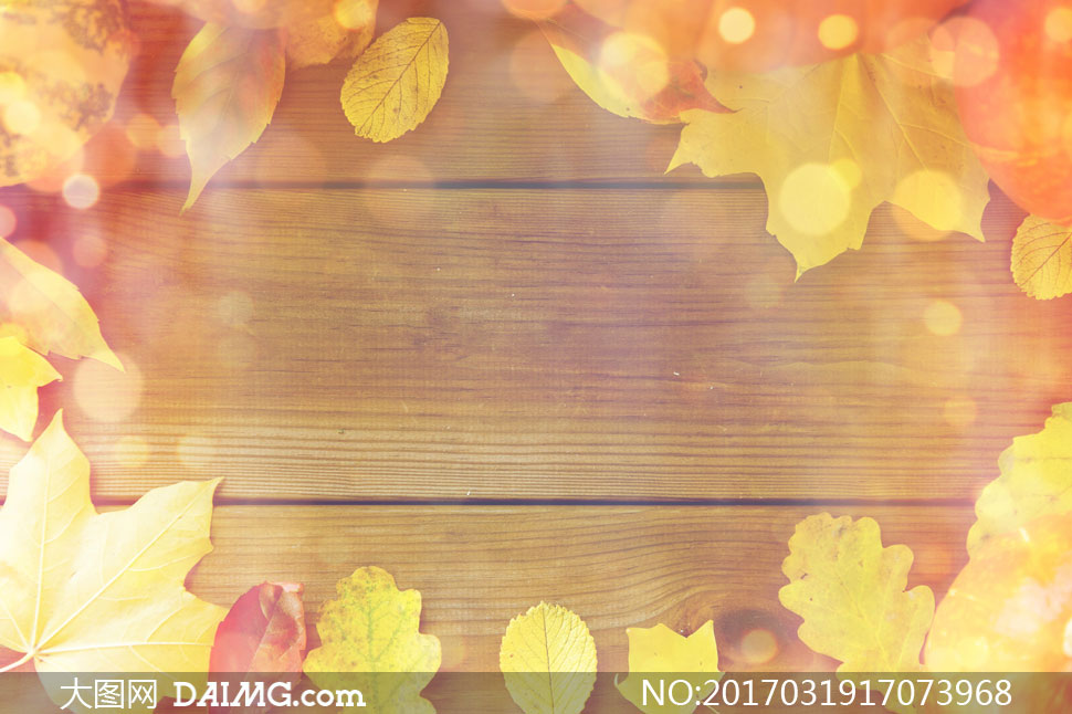 木板上的秋天树叶边框摄影高清图片 - 大图网设计素材