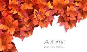 秋天红黄色的树叶边框设计高清图片