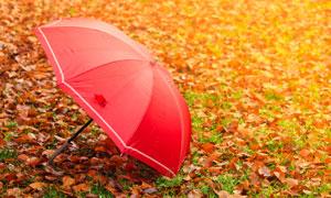 放在草地上的红色雨伞摄影高清图片