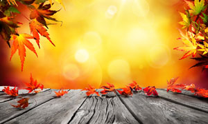 木板树叶与耀眼的阳光摄影高清图片