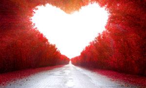 长满有红叶的树林创意设计高清图片