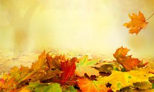 轻飘飘落下的秋天树叶摄影高清图片
