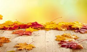 秋天落叶缤纷情景朦胧效果高清图片