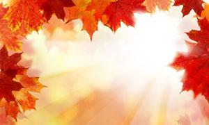 耀眼阳光与泛红的树叶摄影高清图片