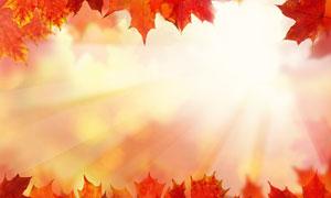 红色树叶边框逆光效果创意高清图片