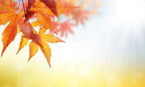 朦胧光斑与秋天的树叶特写高清图片