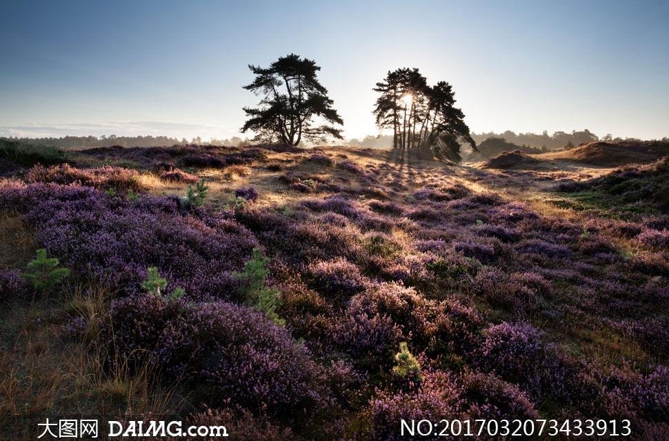 素材自然风景风光树木树林树丛大树阳光草丛草地植物花草天空鲜花蓝天