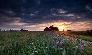 黄昏夕阳下的花草植物摄影高清图片