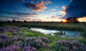 小池塘周围的花草植物摄影高清图片