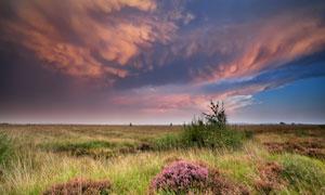 天空云彩与花草丛植物摄影高清图片