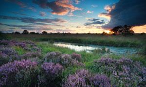 黄昏时分池塘边的草丛摄影高清图片
