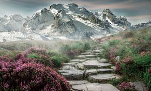 雪山与在山坡上的小路花草高清图片