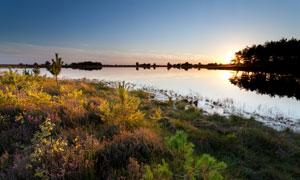 夕阳美景与湖边的花草摄影高清图片