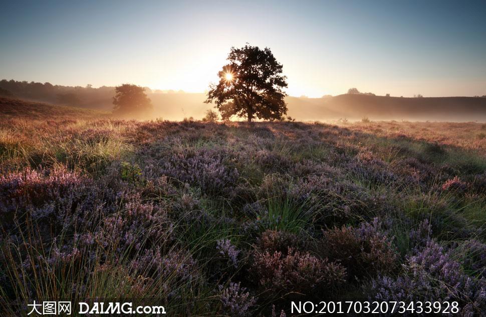 大树与丛生的杂草逆光摄影高清图片