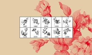 高清晰复古花朵和花卉PS笔刷