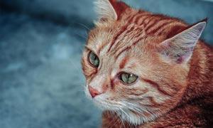 动物照片后期暖色艺术效果LR预设
