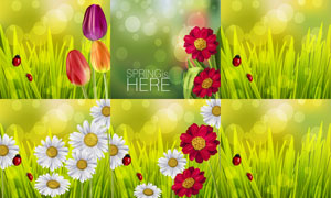 七星瓢虫与郁金香菊花设计矢量素材