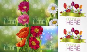 梦幻光斑下的鲜艳花卉植物矢量素材