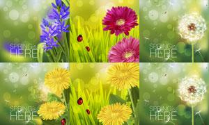 春天七星瓢虫与蒲公英植物矢量素材