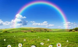 蓝天白云彩虹与芳草地摄影高清图片