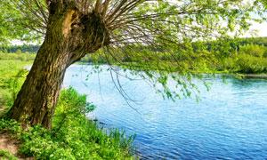 草丛与河边的一颗大树摄影高清图片
