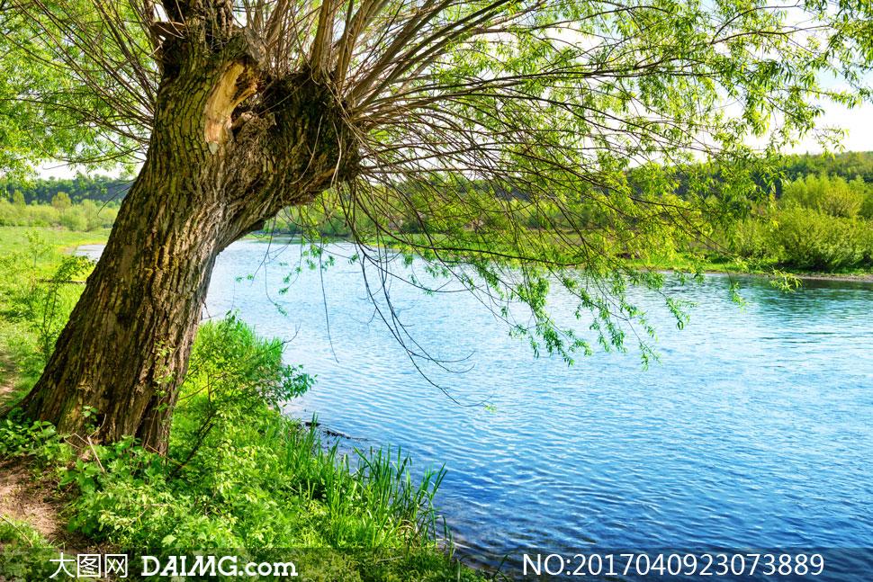 草丛与河边的一颗大树摄影高清图片 - 大图网设计素材