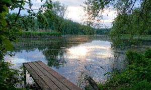 湖边茂密树木自然风光摄影高清图片