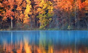 在河边的秋天树林风光摄影高清图片