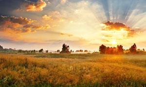 黄昏云霞与树木农作物摄影高清图片