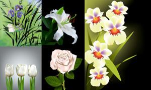 郁金香与玫瑰花等花卉植物矢量素材