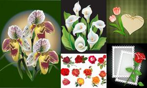 边框装饰与逼真花卉植物等矢量素材